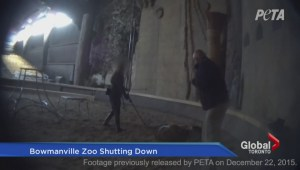 Bowmanville Zoo to close after former director charged with animal cruelty offences