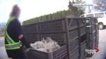 Animal torture investigation in Chilliwack