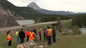 New fence along Alberta highway to save wildlife