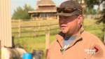 Springbank ranch hand describes terrifying ordeal