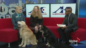 Alberta Kennel Club Winter Classic