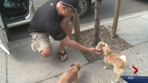 Man caught on camera after leaving dogs in hot car