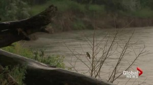 Flood Watch: Oldman River high water levels