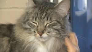 """Adopt a Pet: Jun 29 """"Benjamin"""""""