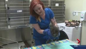 First-of-a-kind patient at Okanagan animal hospital