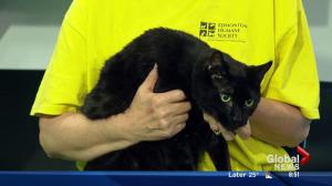 Edmonton Humane Society: Larry and Mike