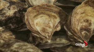 Health officials issue warning to only eat properly cooked oysters