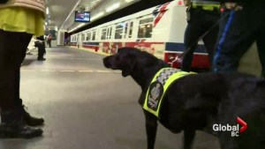 TransLink, YVR step up security measures