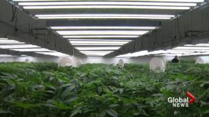 Markham marijuana grow house concerns addressed in Parliament