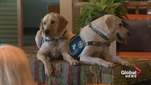 Trauma dogs are newest staff members to help abused children heal