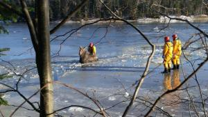 New Brunswick firefighters, RCMP rescue moose trapped in ice