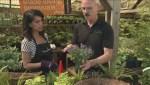Gardening: Baskets for shade