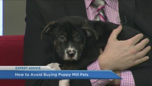 Are you buying your pets from a puppy mill?