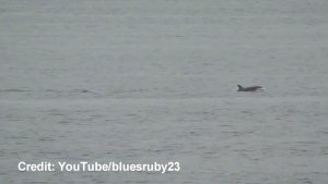 Baby Orca spotted in Puget Sound