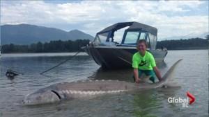 New Jersey boy catches monster fish near Chilliwack