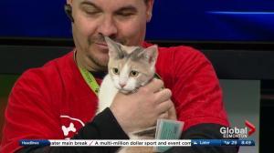 Edmonton Humane Society: Naboo