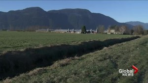 Avian flu quarantine expands in the Fraser Valley