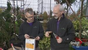 Gardening: Proper Pruning