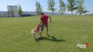 Health FYI: Seizure response dogs