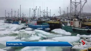 Packed sea ice prevent Newfoundland fishermen from starting season