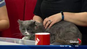 Second Chance Animal Rescue Society stops by with cats