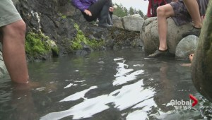 Signs of life return to famous Gwaii Haanas hot springs