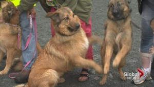 Rescued dogs reunited