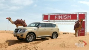 Nissan hopes camelpower can become new global standard