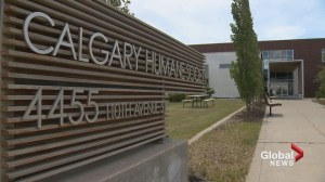 Calgary man charged in hot car death of Labrador Retriever