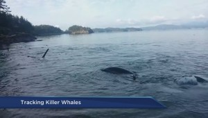 Tracking Southern Resident Killer Whales