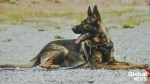 VPD canine Rebel aids in arrest