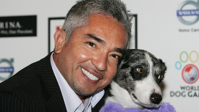 news morning cesar millan whisperer investigated animal cruelty against