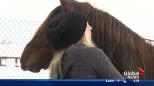 Edmonton woman gives badly injured horse second chance at life
