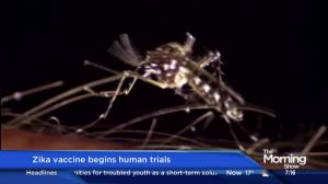 Zika vaccine begins human trials