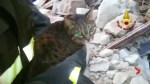 Cat rescued 16 days after Italy quake