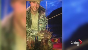 NHL player Stoner in court accused of illegally killing bear