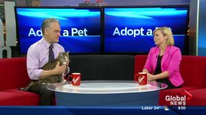 Adopt A Pet: Slugger and Desmond