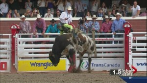 Calgary Stampede Rodeo Results Day 2