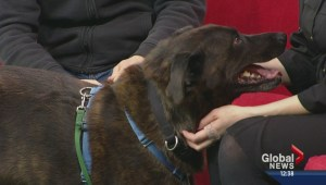 Pet of the Week: Outlaw