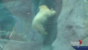 Zoo tunnels re-open