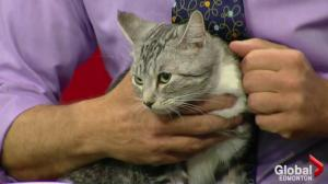 Edmonton Humane Society: Flash and Kitty