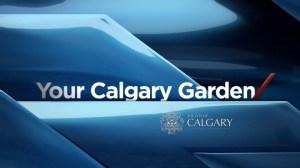 Your Calgary Garden: Aug 9