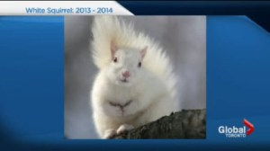 Elusive white squirrel dies Sunday night.