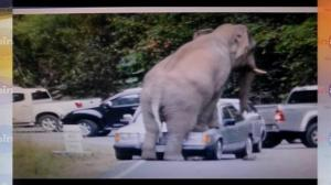 Elephant rampage caught on tape in Thailand