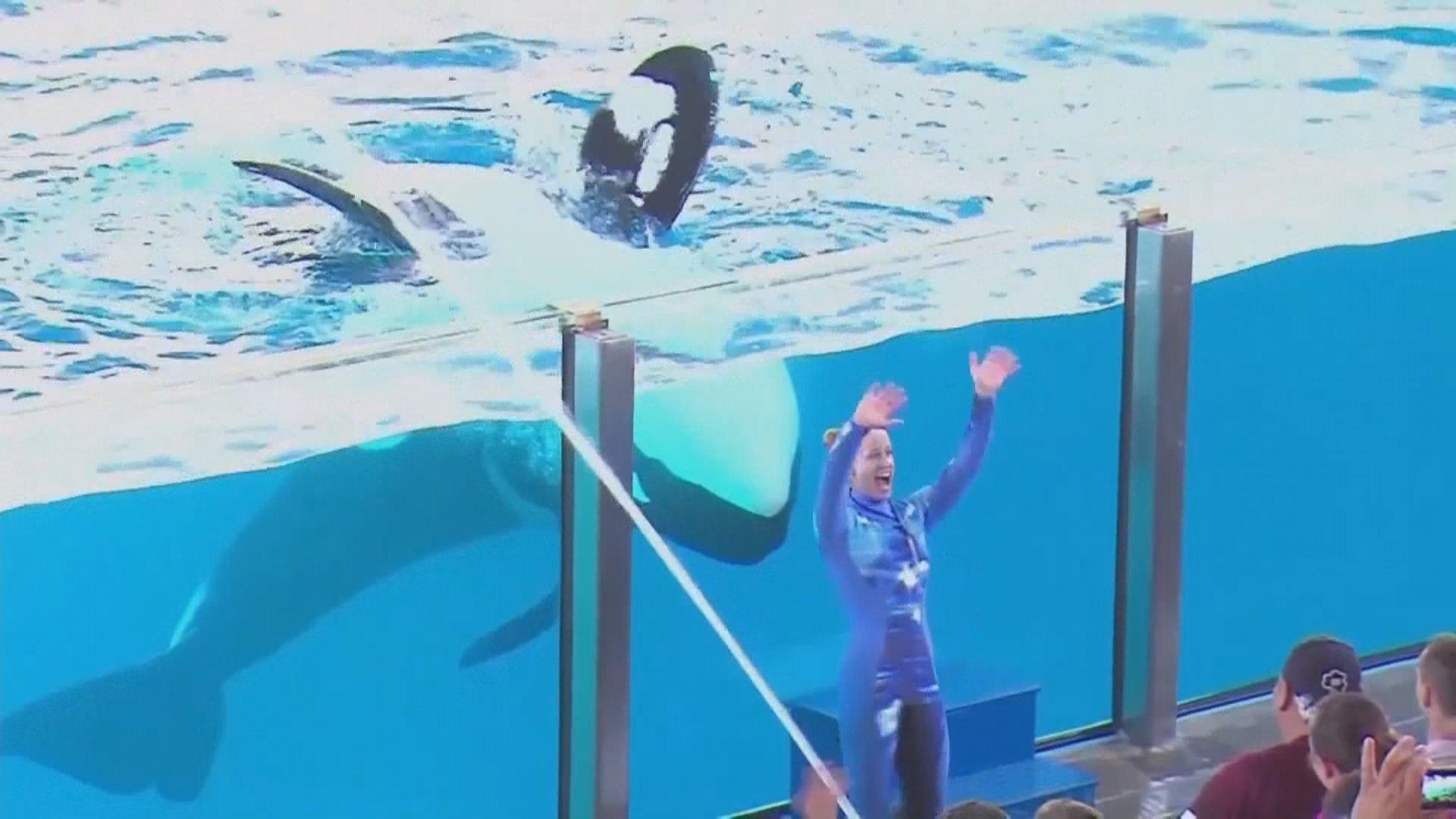 APNewsBreak: Baby orca! Last killer whale born at SeaWorld class=