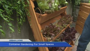 Container garden growing for small spaces