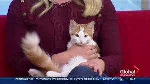 Fluff the cat looking for new home