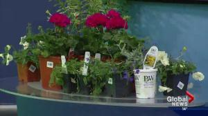 Itching to get growing? Tips on container gardening