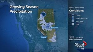Alberta harvest prospects improved – but rain threatens grain quality