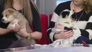 Adopt a Pet – Antonio and Michael